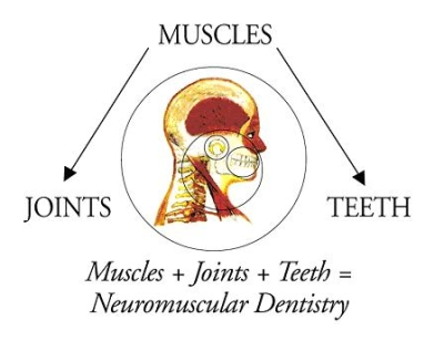 A Chart showing how joints muscles and teeth all work together in TMJ