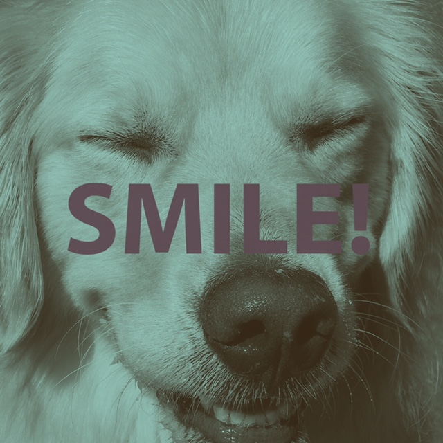 A picture of a dog smiling.
